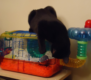 Felix on the hamster cage